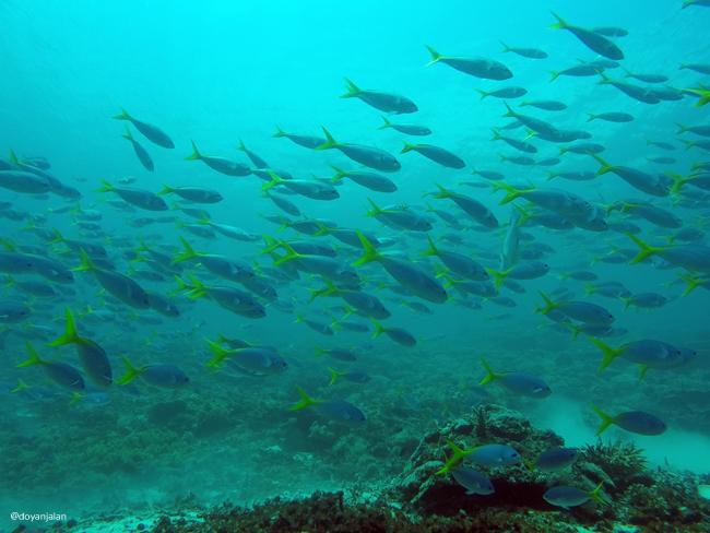 Diving di Raja Ampat