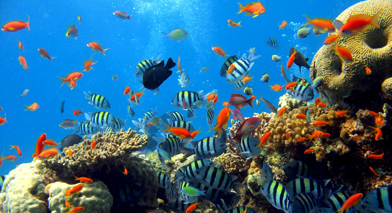 Bawah Laut Wisata Raja Ampat